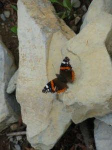 Sentiero delle farfalle al Righi