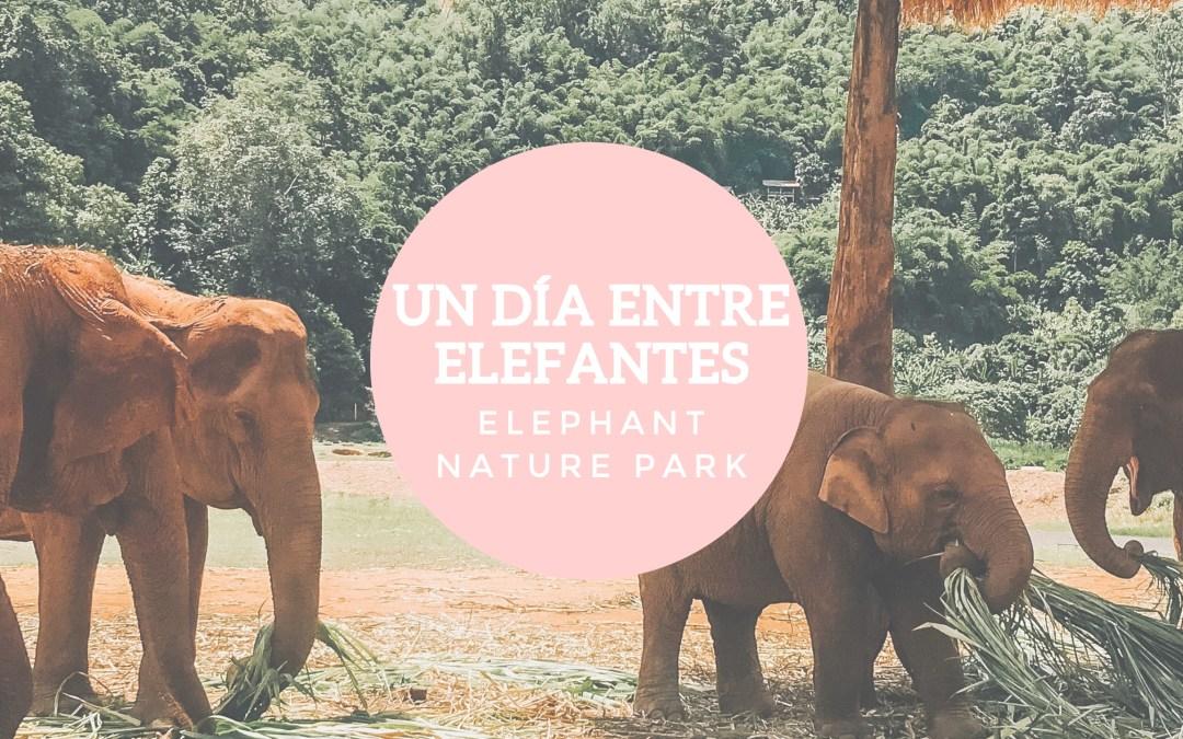 Un día entre elefantes en Tailandia: Elephant Nature Park