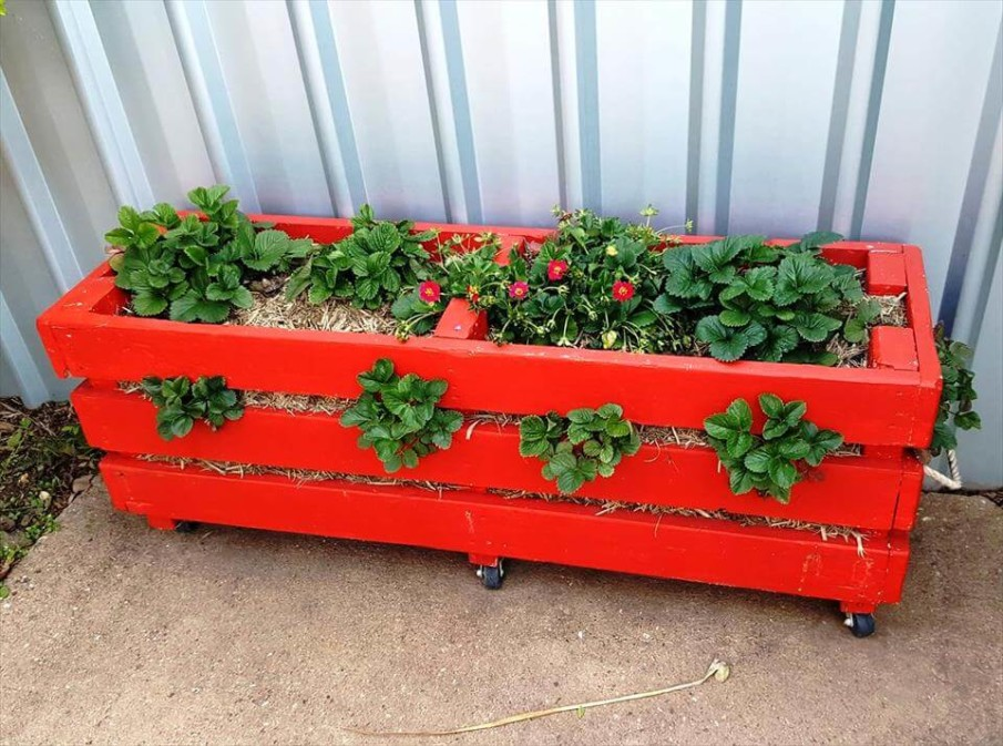 DIY Strawberry Planter Ideas for Container Planting
