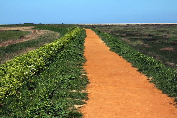 Read earth path stretching ahead to the horizon, flanked by sharp green wildflowers. Norfolk Coast Path, 2018