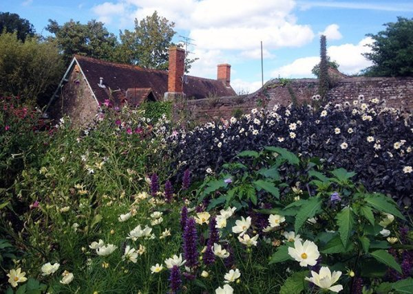 Old Dunster cottage and flower garden