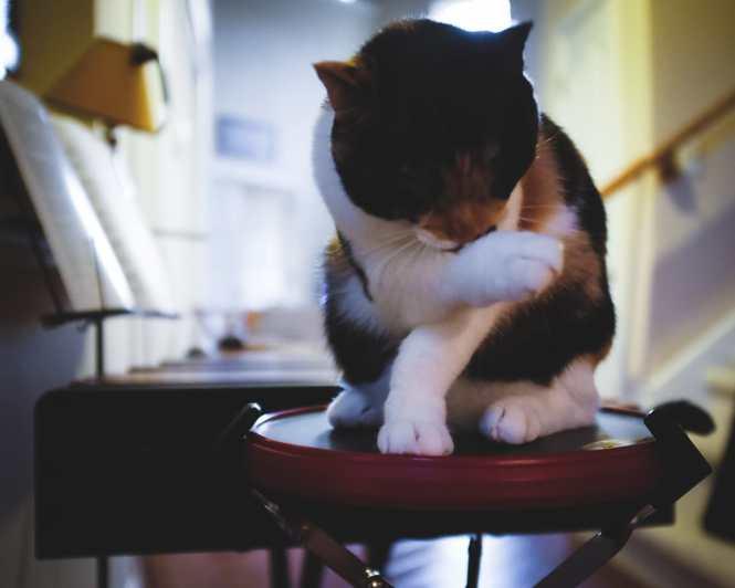 """Kitty on Drum Pad"" Cedar Park, 2017"