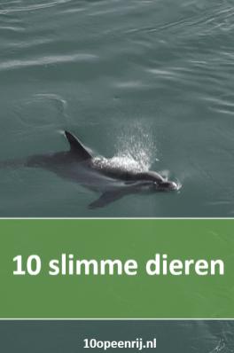 10 slimme dieren