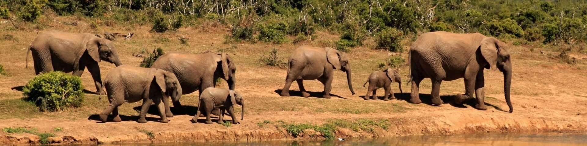 banner dieren uitsterven