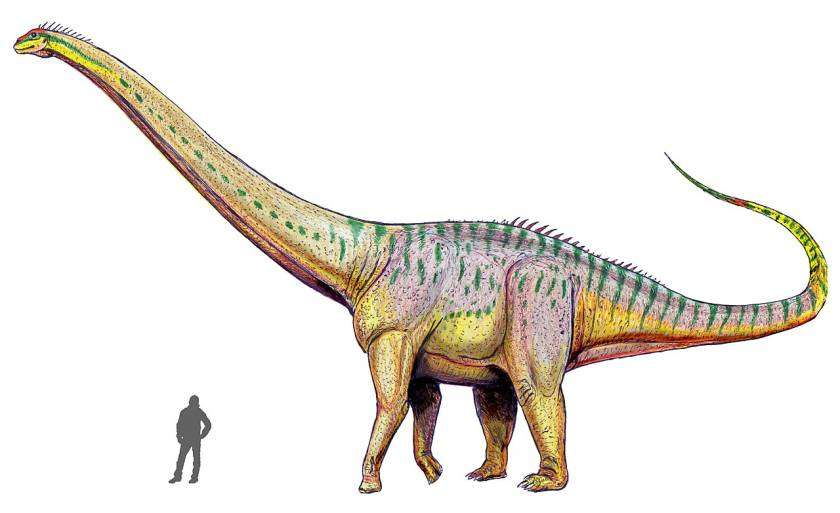 Amphicoelias - Aller grootste dieren op een rij