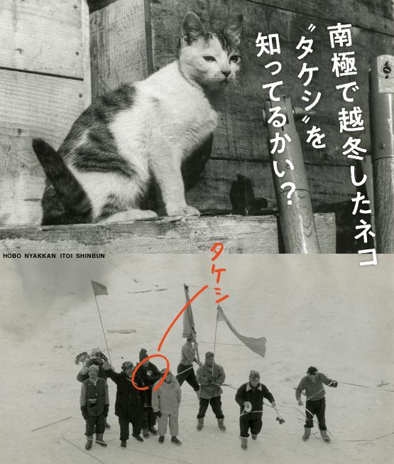 """南極で越冬したネコ""""タケシ""""を知ってるかい?- ほぼ日刊イトイ新聞"""
