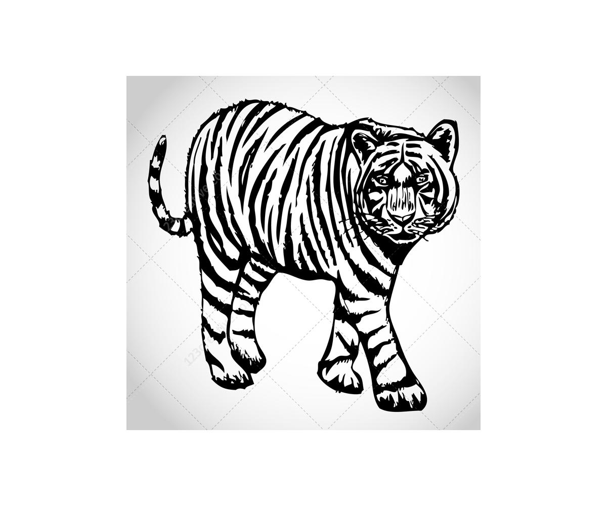 Sketch Tiger Vectors 123creative Com