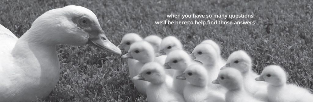 ducks from 123 Divorce
