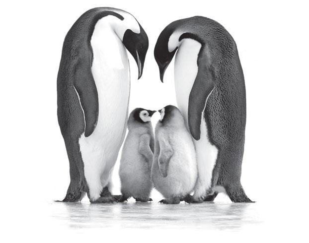 penguins divorce online uk