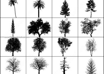 Free Photoshop Brushes Tree