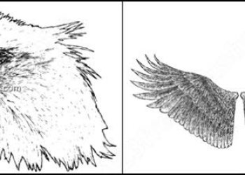 Hand Drawn Eagle – Wings Brushes Photoshop