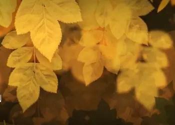 High Resolution Leaf