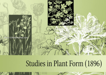 Studies in Plant Form