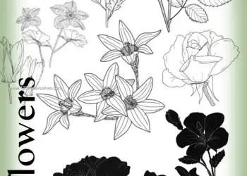 Floral Brushes Deviantart