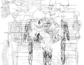 Anatomy Stock