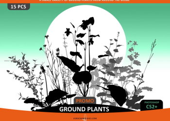 Ground Plants