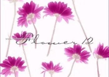 Photoshop Flower Brushes Free