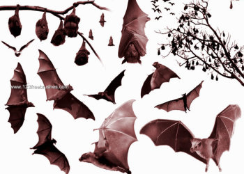 Free Bats Brushes