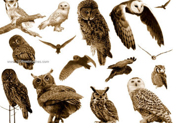 Free Owl Photoshop Brushes