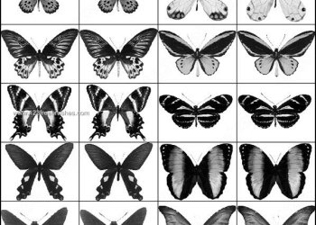 Butterfly Brushes Download