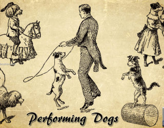 Performing Dogs