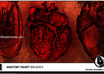 Photoshop Anatomy Heart brushes