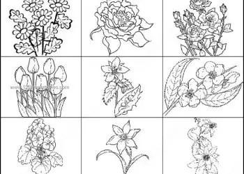 Flowers Outline Brushes