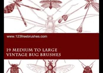 Vintage Bug