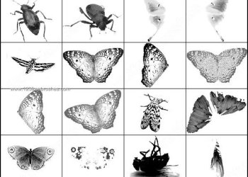 Butterfly – Insects Brushes Free