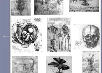 Da Vinci Body Sketches