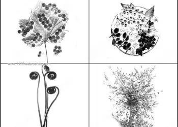 Tree – Berries Brush