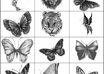 Free Butterfly – Tiger Brushes Photoshop