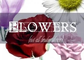 Flower Brushes Cs2