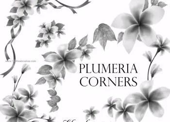Plumeria Corners