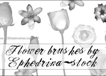 Flower Brushes Photoshop Mac