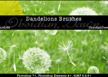 Dandelions and  Seeds