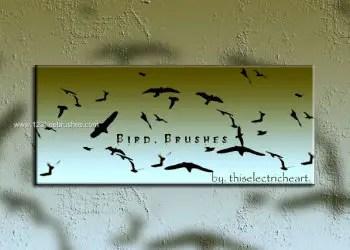 Free Bird Brushes for Photoshop