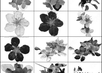 Flower Brushes for Photoshop 7