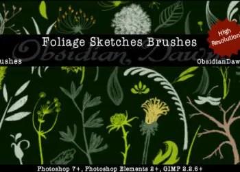 Foliage Sketches