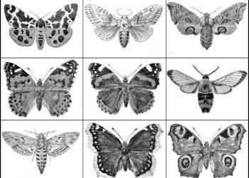 Butterfly Photoshop Brushes Download