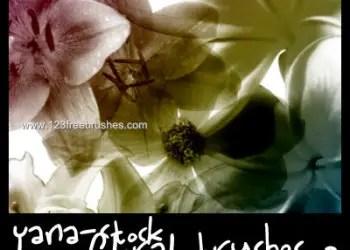 Floral Decorative