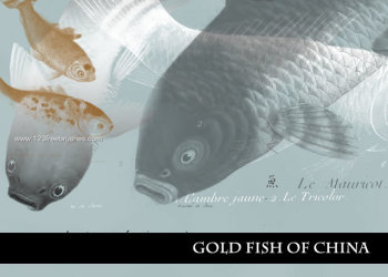 Goldfish of China