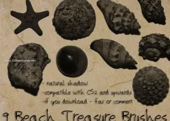 Beach Treasure – Seashell
