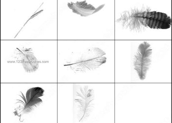 Feathers & Wheat Free Brushes Pack