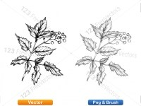 5002011-sketchy-plants-vector-and-photoshop-brush-pack-04_p001