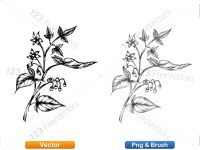 5002011-sketchy-plants-vector-and-photoshop-brush-pack-04_p013