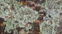 5051002-algae-texture-on-tree-bark-01_p003