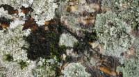 5051002-algae-texture-on-tree-bark-01_p005