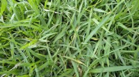 5051003-green-grass-texture-pack-01_p004