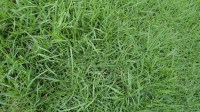 5051003-green-grass-texture-pack-01_p005